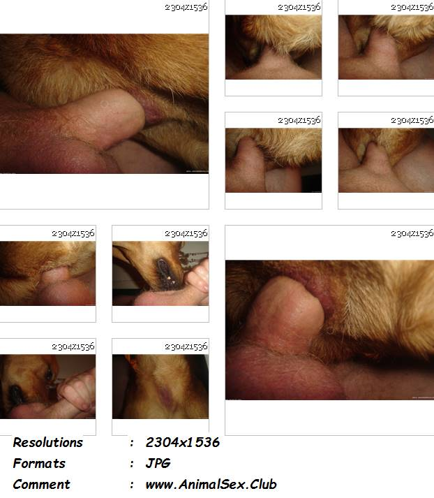 0311 ManZFoto Dog Anal Pictures Picture Licking   13 Pics - Dog Anal Pictures Picture Licking - 13 Pics - Male Zoophilia Pictures